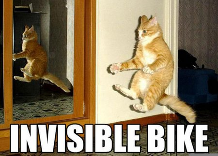 funny-kitty-funny-cat-pictures-32928944-720-518